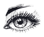 Eyes. Hand drawn sketch. Vector illustration Royalty Free Stock Image