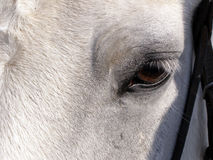 Eyes of the horse. Eyes of horse is macro Royalty Free Stock Photography