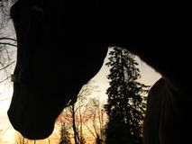 Through the eyes of a horse. Silhouette of a horse, looking towards freedom. Finland. Ypäj Royalty Free Stock Images