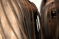 Eyes of horses. The close up of eyes of two horses Stock Images