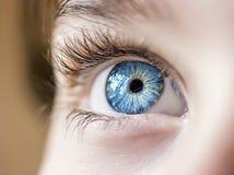 eyes insightful Arkivfoton