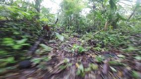 Through the eyes of a jungle creature predator stock video