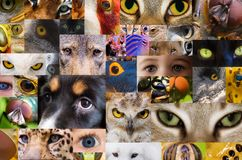 Eyes (looking ) Royalty Free Stock Photos
