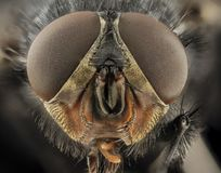 Eyes, Macro, Blue Bottle Fly Royalty Free Stock Images