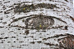 The eyes of nature. See us . Tree bark with patterns that resemble eyes in the woods. Abstract nature concept Stock Photo