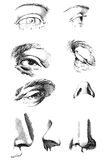 Eyes. Nose. Anatomy and proportions Stock Photos