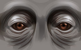 Eyes of an orangutan Stock Photos