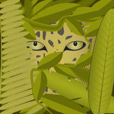 Eyes of the predator. Predator prowling in a thick rainforest Stock Image