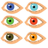Eyes with pupils of different colors Stock Images