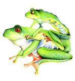 eyes rolig grön red för grodor Royaltyfria Bilder