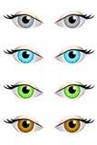 Eyes set blue green grey brown  illustration Stock Images
