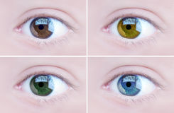 Eyes. Set of four colored eyes- Brown, light brown, green and blue eyes Royalty Free Stock Photography