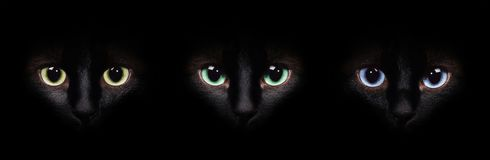 Eyes of the siamese cat in the darkness. Different eyes collage. stock photo