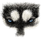 The eyes of Siberian Husky Stock Photography