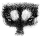 The eyes of Siberian Husky Stock Photo
