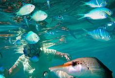 Eyes Underwater. A snorkeller and tropical fish go eye to eye underwater. Mamanuca Islands Fiji stock image