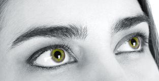 Eyes in which love Stock Image