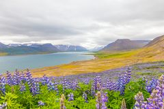 Eyjafjordur fiord iceland Royalty Free Stock Image