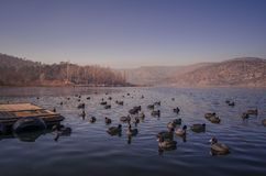 Ankara lake ducks blue winter Royalty Free Stock Image