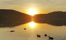 Eymir Lake Sunset Fulica Atra. With sunset view royalty free stock image