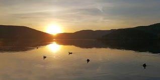 Eymir Lake Sunset Fulica Atra. A panoramic view of Eymir lake and Fulica Atra birds stock photo