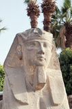 Eyptian sphinx. Sphinx in sphinx alley, Luxor temple, Egypt Stock Images