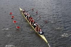 Eyre Rowing races in the Head of Charles Regatta Royalty Free Stock Photography