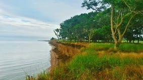 Eysk. Azov Sea, nature, trees Royalty Free Stock Photo
