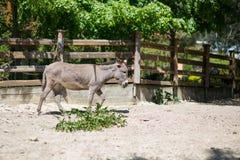 ezel in de dierentuin stock afbeeldingen
