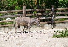 ezel in de dierentuin royalty-vrije stock afbeelding