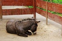 Ezel in dierentuin Stock Foto's