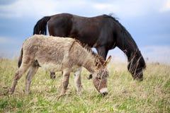 Ezel en paard Royalty-vrije Stock Foto's