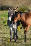 Ezel en paard op een gebied Royalty-vrije Stock Foto's