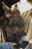Ezel in het landbouwbedrijf Stock Fotografie