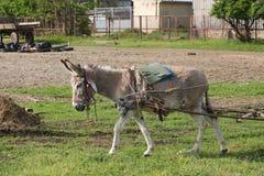 Ezel in het werk Royalty-vrije Stock Foto