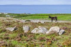Ezel met Fanore-landbouwbedrijven en Aran Islands op achtergrond royalty-vrije stock foto