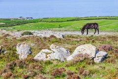 Ezel met Fanore-landbouwbedrijven en Aran Islands op achtergrond royalty-vrije stock afbeelding