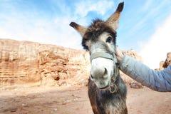 Ezel op een woestijn in het nationale park van Jordanië - Wadi Rum-woestijn Reis photoshoot Natuurlijke achtergrond stock foto