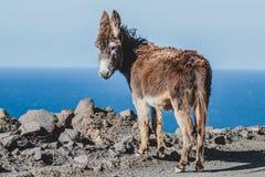 Ezel op het strand Royalty-vrije Stock Foto