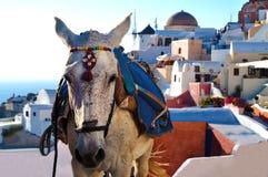 Ezel van Santorini Stock Afbeelding