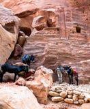 Ezels bij Petra Stock Afbeeldingen