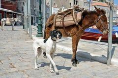 Ezels en hond Stock Foto's