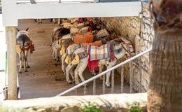 Ezels in Mijas het rusten Stock Afbeeldingen