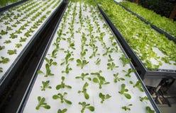 Fábrica agrícola moderna da planta Fotografia de Stock