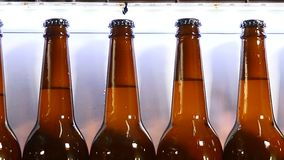 Fábrica da cerveja Parte final da parte tecnologico da produção da cerveja transporte na cervejaria, fila de garrafas enchidas pr video estoque
