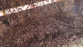Fábrica de cana-de-açúcar vídeos de arquivo