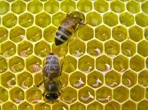 Fábrica de la miel Imagenes de archivo