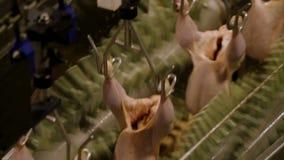 Fábrica de la transformación de los alimentos, carne del pollo almacen de metraje de vídeo