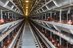 Fábrica de las aves de corral de la producción del huevo Foto de archivo libre de regalías