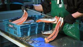 Fábrica de los pescados de mar almacen de metraje de vídeo